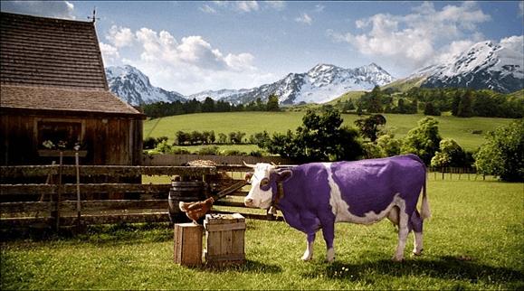 Cette vache blanche et violette